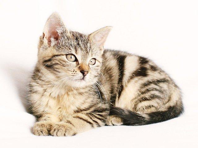 Katze Vitalpilze
